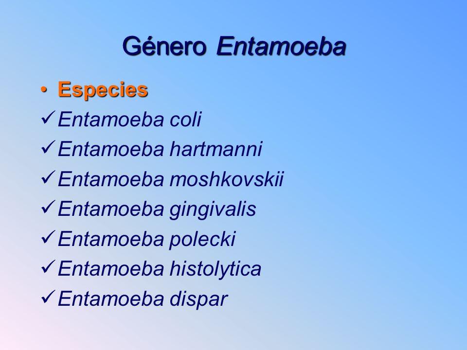 Género Entamoeba EspeciesEspecies Entamoeba coli Entamoeba hartmanni Entamoeba moshkovskii Entamoeba gingivalis Entamoeba polecki Entamoeba histolytic