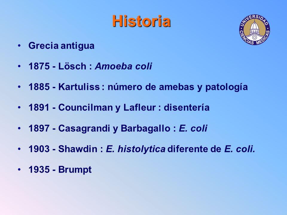 Historia Grecia antigua 1875 - Lösch : Amoeba coli 1885 - Kartuliss : número de amebas y patología 1891 - Councilman y Lafleur : disentería 1897 - Cas