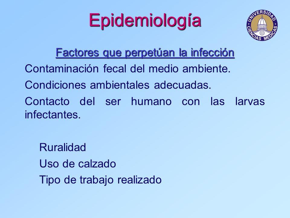 Epidemiología Factores que perpetúan la infección Contaminación fecal del medio ambiente. Condiciones ambientales adecuadas. Contacto del ser humano c