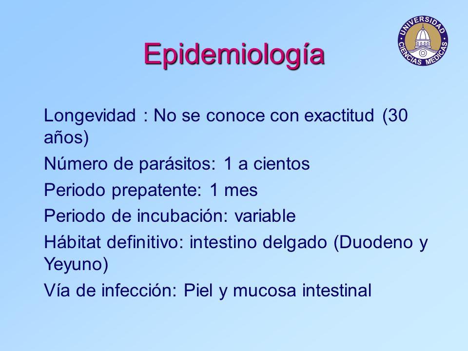 Epidemiología Longevidad : No se conoce con exactitud (30 años) Número de parásitos: 1 a cientos Periodo prepatente: 1 mes Periodo de incubación: vari