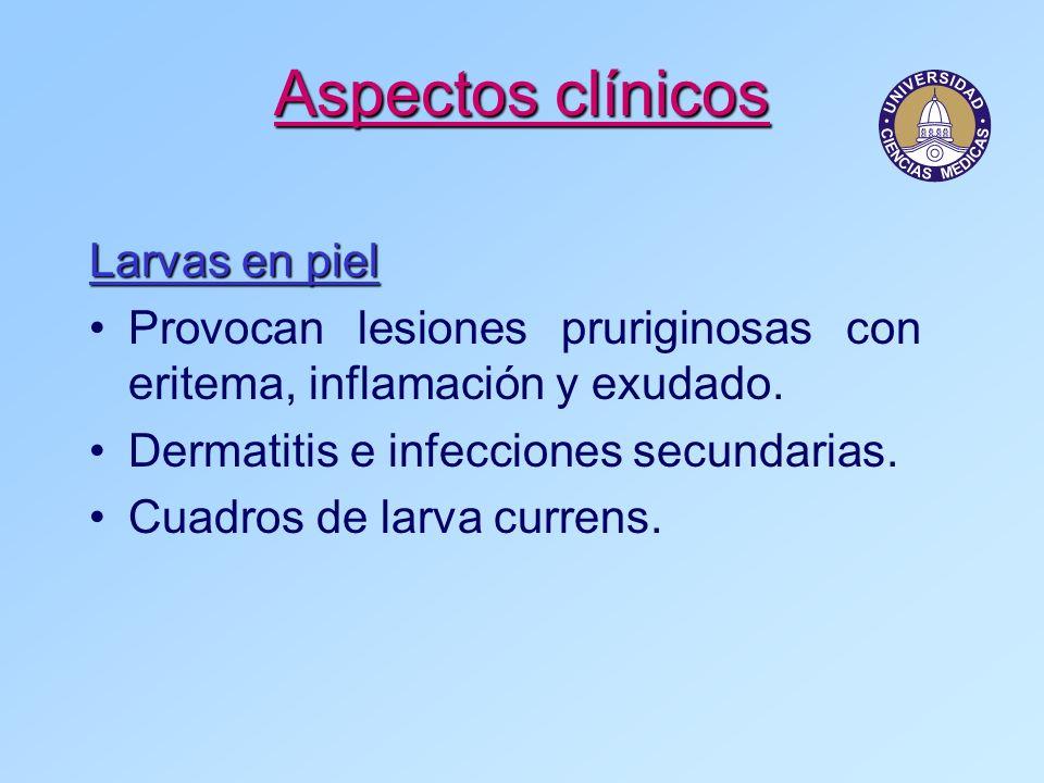 Aspectos clínicos Larvas en piel Provocan lesiones pruriginosas con eritema, inflamación y exudado. Dermatitis e infecciones secundarias. Cuadros de l