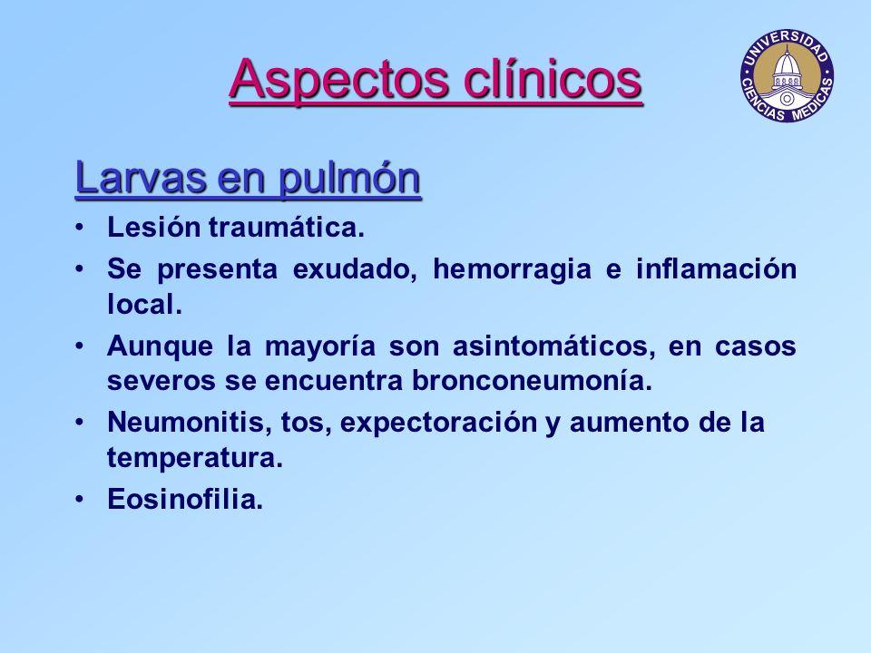 Larvas en pulmón Lesión traumática. Se presenta exudado, hemorragia e inflamación local. Aunque la mayoría son asintomáticos, en casos severos se encu
