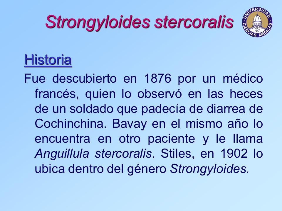 Strongyloides stercoralis Historia Fue descubierto en 1876 por un médico francés, quien lo observó en las heces de un soldado que padecía de diarrea d