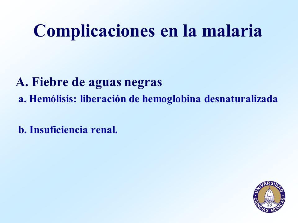 Complicaciones en la malaria A. Fiebre de aguas negras a. Hemólisis: liberación de hemoglobina desnaturalizada b. Insuficiencia renal.