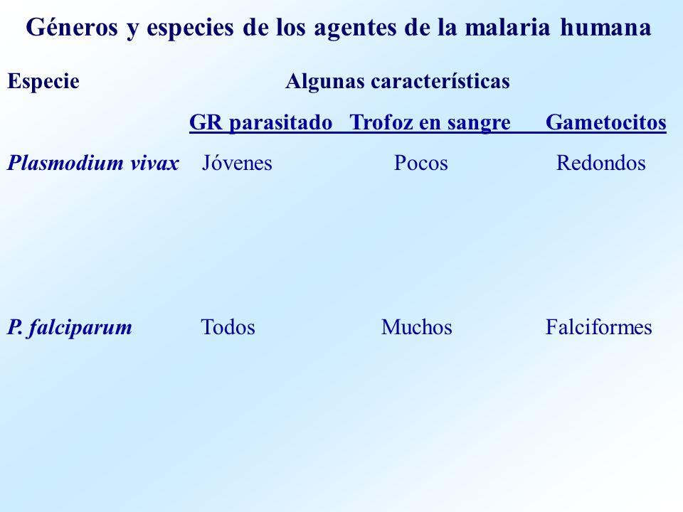 Géneros y especies de los agentes de la malaria humana Especie Algunas características GR parasitado Trofoz en sangre Gametocitos Plasmodium vivax Jóv