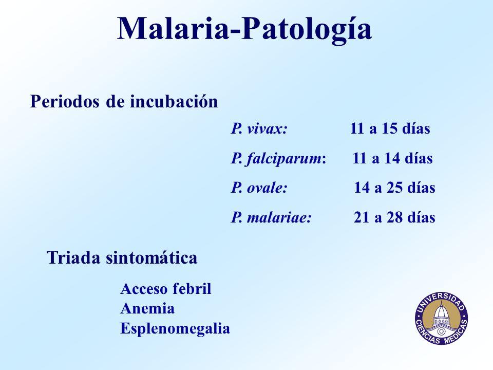 Malaria-Patología Periodos de incubación P. vivax: 11 a 15 días P. falciparum: 11 a 14 días P. ovale: 14 a 25 días P. malariae: 21 a 28 días Triada si
