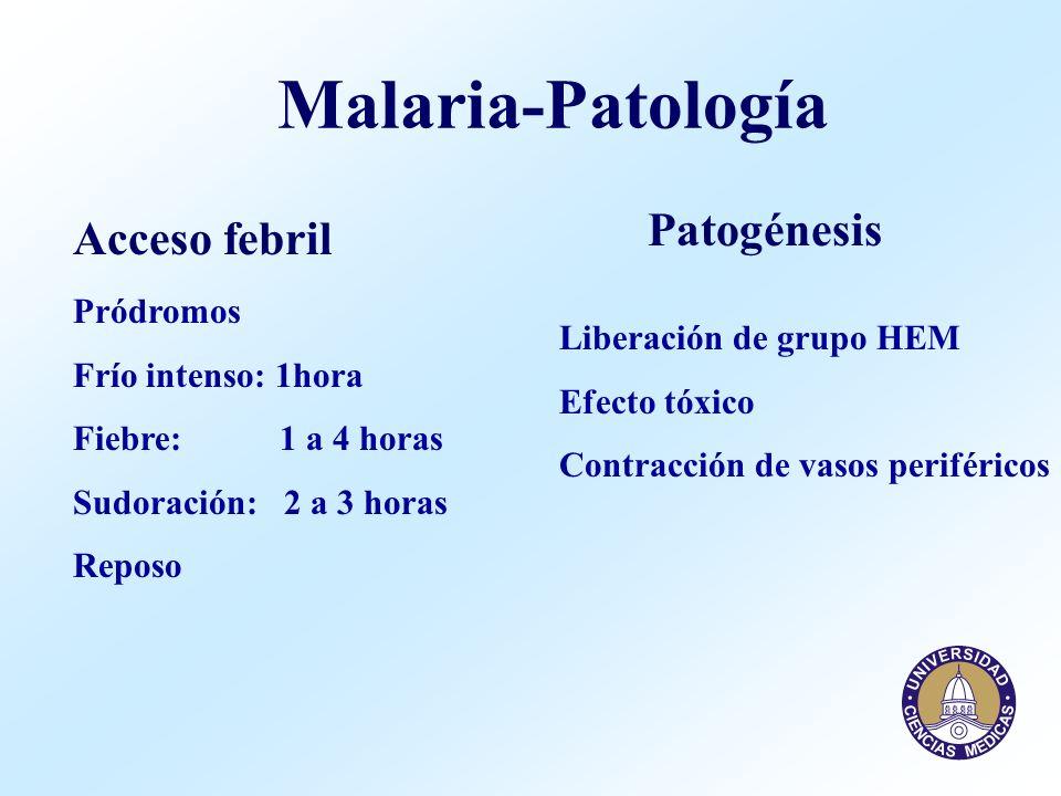 Malaria - Clínica Clásica Anemia Tipo: hemolítica, normocítica, normocrómica Patogénesis: a.Lisis de eritrocitos por parásitos b.Lisis por destrucción en bazo de - eritrocitos parasitados - eritrocitos modificados por parásitos - eritrocitos modificados por drogas