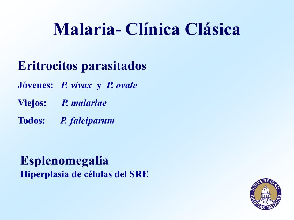 Malaria- Clínica Clásica Eritrocitos parasitados Jóvenes: P. vivax y P. ovale Viejos: P. malariae Todos: P. falciparum Esplenomegalia Hiperplasia de c