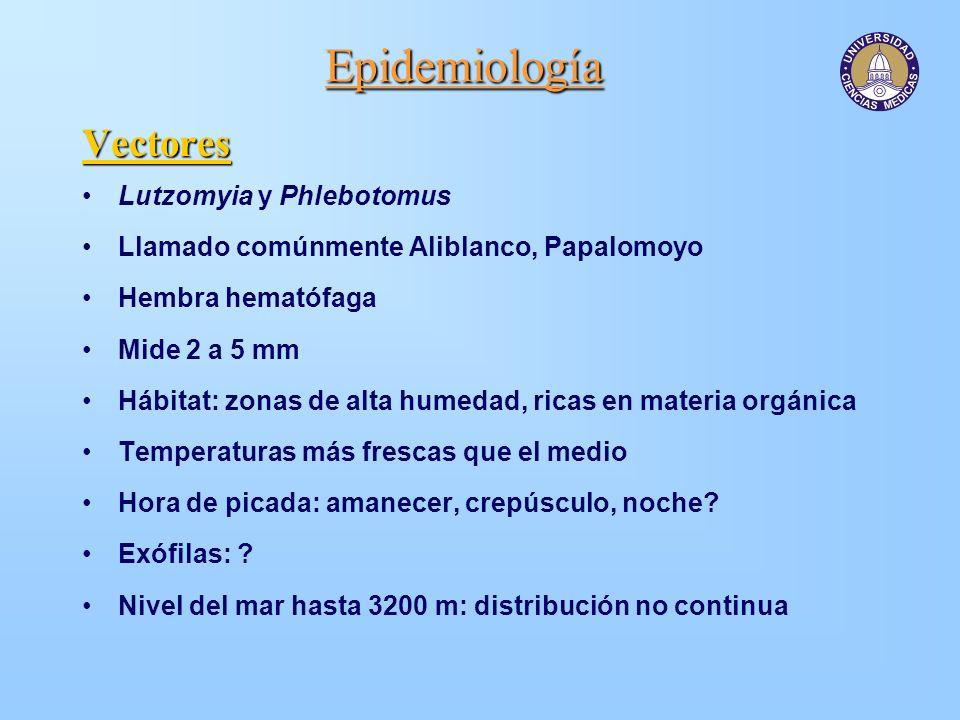 Epidemiología Vectores Lutzomyia y Phlebotomus Llamado comúnmente Aliblanco, Papalomoyo Hembra hematófaga Mide 2 a 5 mm Hábitat: zonas de alta humedad