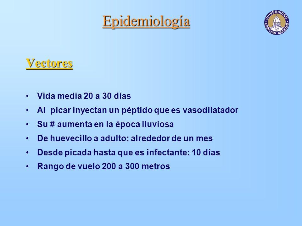 Epidemiología Vectores Vida media 20 a 30 días Al picar inyectan un péptido que es vasodilatador Su # aumenta en la época lluviosa De huevecillo a adu