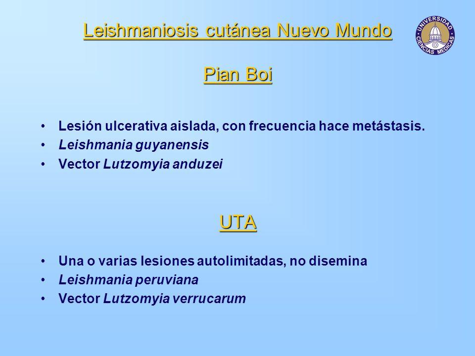 Leishmaniosis cutánea Nuevo Mundo Pian Boi Lesión ulcerativa aislada, con frecuencia hace metástasis. Leishmania guyanensis Vector Lutzomyia anduzeiUT