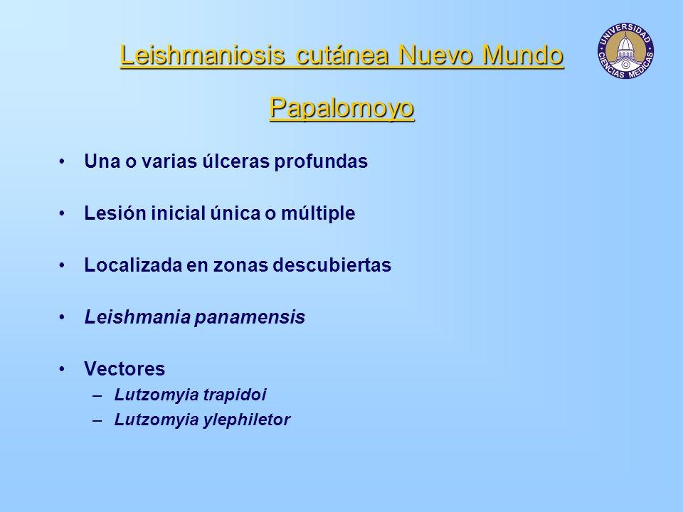 Leishmaniosis cutánea Nuevo Mundo Papalomoyo Una o varias úlceras profundas Lesión inicial única o múltiple Localizada en zonas descubiertas Leishmani
