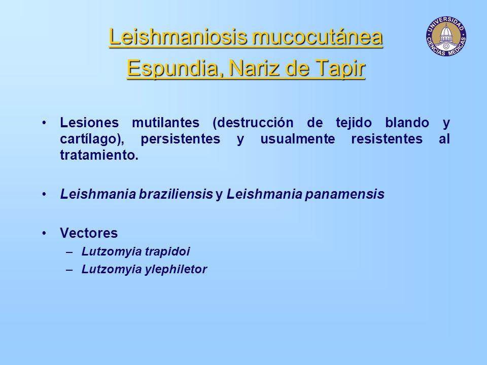 Leishmaniosis mucocutánea Espundia, Nariz de Tapir Lesiones mutilantes (destrucción de tejido blando y cartílago), persistentes y usualmente resistent