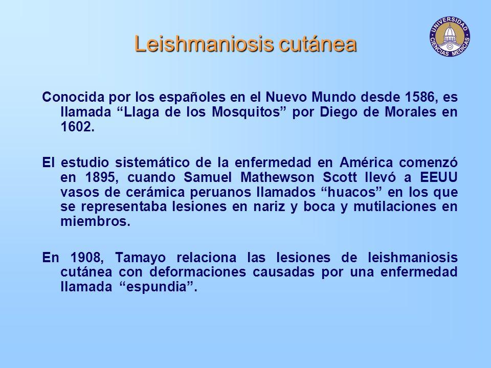 Leishmaniosis cutánea Nuevo Mundo Papalomoyo Una o varias úlceras profundas Lesión inicial única o múltiple Localizada en zonas descubiertas Leishmania panamensis Vectores –Lutzomyia trapidoi –Lutzomyia ylephiletor