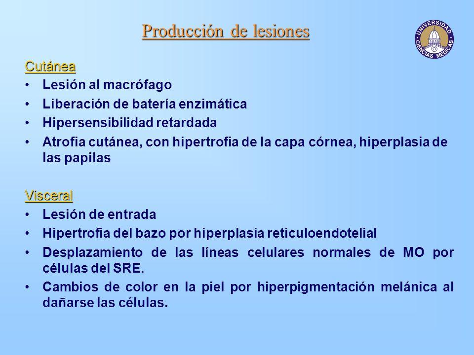 Producción de lesiones Cutánea Lesión al macrófago Liberación de batería enzimática Hipersensibilidad retardada Atrofia cutánea, con hipertrofia de la
