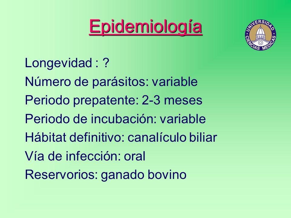 Epidemiología Longevidad : ? Número de parásitos: variable Periodo prepatente: 2-3 meses Periodo de incubación: variable Hábitat definitivo: canalícul