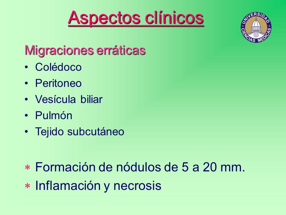 Aspectos clínicos Migraciones erráticas Colédoco Peritoneo Vesícula biliar Pulmón Tejido subcutáneo Formación de nódulos de 5 a 20 mm. Inflamación y n