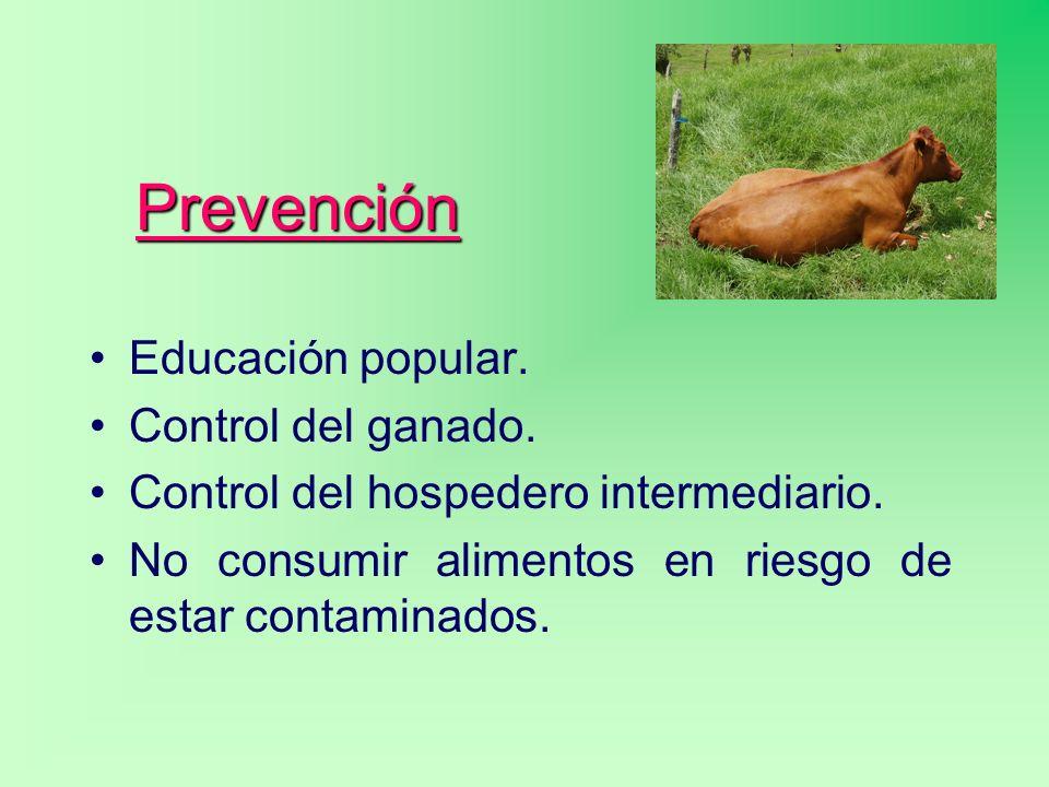 Prevención Educación popular. Control del ganado. Control del hospedero intermediario. No consumir alimentos en riesgo de estar contaminados.