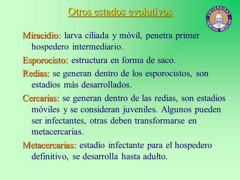 Otros estados evolutivos Miracidio: Miracidio: larva ciliada y móvil, penetra primer hospedero intermediario. Esporocisto: Esporocisto: estructura en