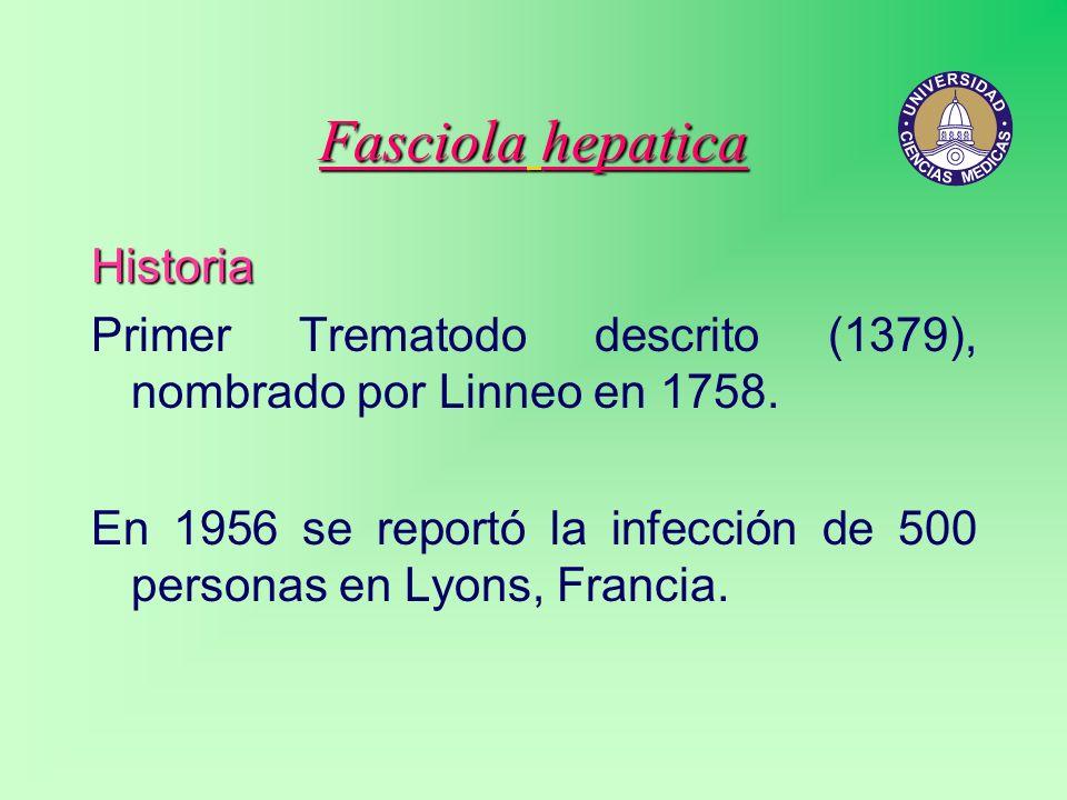 Fasciola hepatica Historia Primer Trematodo descrito (1379), nombrado por Linneo en 1758. En 1956 se reportó la infección de 500 personas en Lyons, Fr