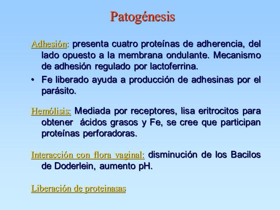 Patogénesis Adhesión: presenta cuatro proteínas de adherencia, del lado opuesto a la membrana ondulante. Mecanismo de adhesión regulado por lactoferri