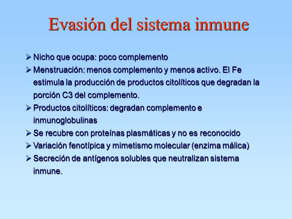 Evasión del sistema inmune ØNicho que ocupa: poco complemento ØMenstruación: menos complemento y menos activo. El Fe estimula la producción de product