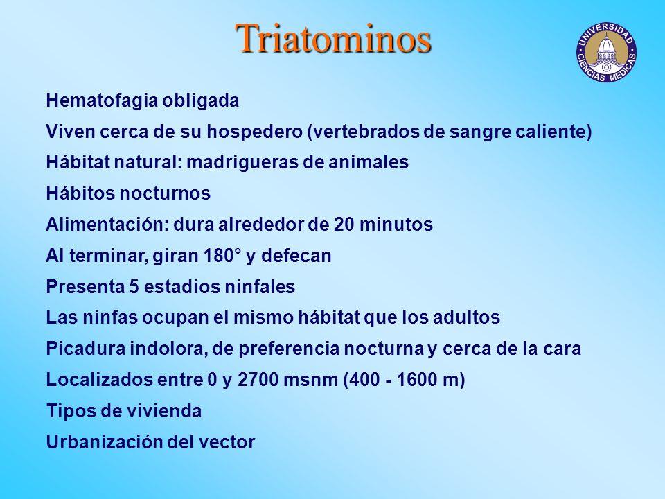 Triatominos Hematofagia obligada Viven cerca de su hospedero (vertebrados de sangre caliente) Hábitat natural: madrigueras de animales Hábitos nocturn