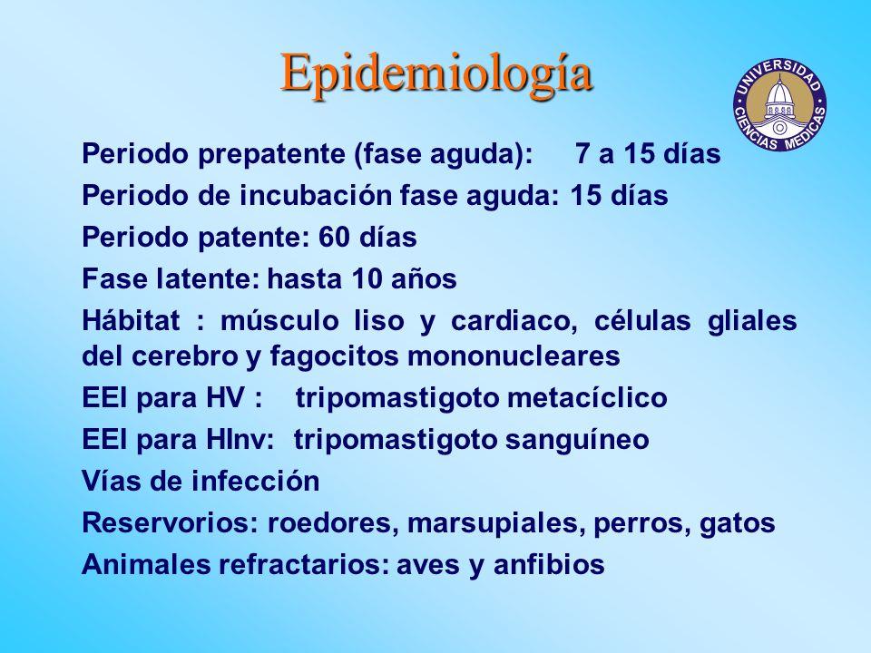 Epidemiología Periodo prepatente (fase aguda): 7 a 15 días Periodo de incubación fase aguda: 15 días Periodo patente: 60 días Fase latente: hasta 10 a