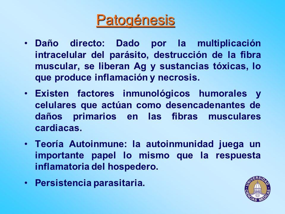 Patogénesis Daño directo: Dado por la multiplicación intracelular del parásito, destrucción de la fibra muscular, se liberan Ag y sustancias tóxicas,