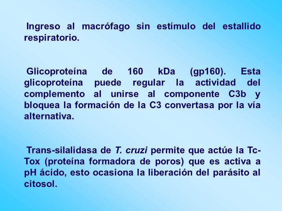 Ingreso al macrófago sin estímulo del estallido respiratorio. Glicoproteína de 160 kDa (gp160). Esta glicoproteína puede regular la actividad del comp