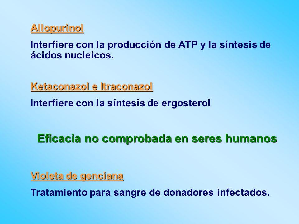 Allopurinol Interfiere con la producción de ATP y la síntesis de ácidos nucleicos. Ketaconazol e Itraconazol Interfiere con la síntesis de ergosterol