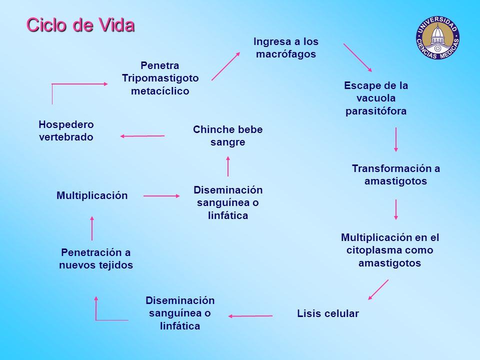 Factores de riesgo Presencia de reservorios parásitos vectores Factores ambientales Factores sociales