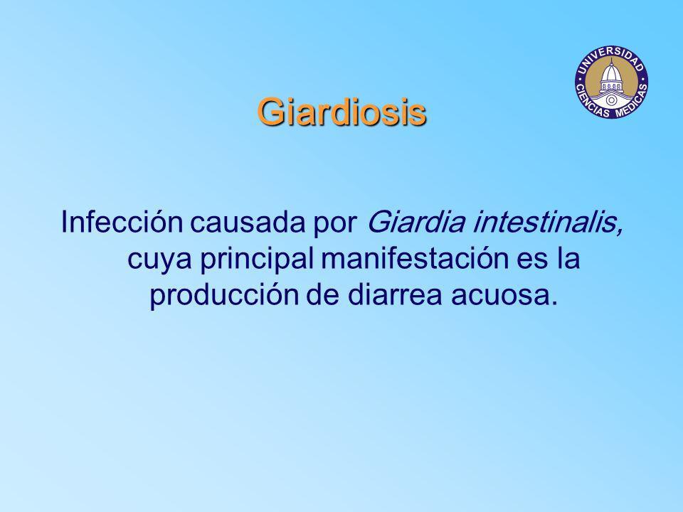 Giardiosis crónica Síntomas Nauseas, anorexia, cefalea, vómito y astenia.