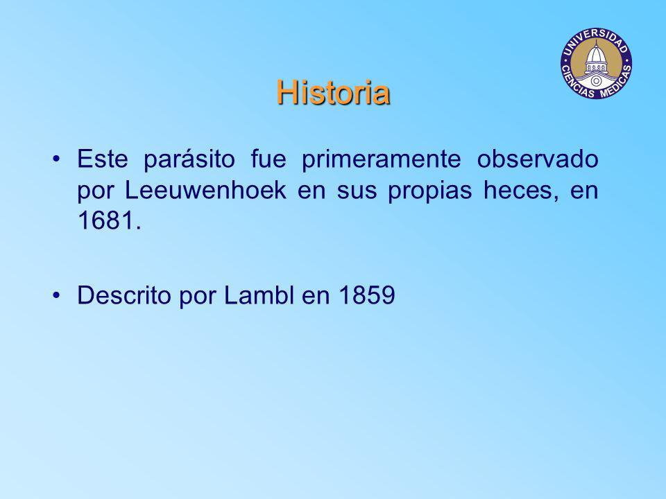 Historia Este parásito fue primeramente observado por Leeuwenhoek en sus propias heces, en 1681. Descrito por Lambl en 1859