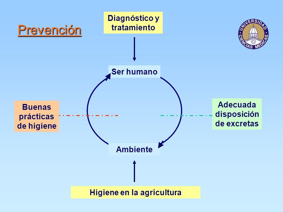 Prevención Ser humano Ambiente Buenas prácticas de higiene Adecuada disposición de excretas Diagnóstico y tratamiento Higiene en la agricultura