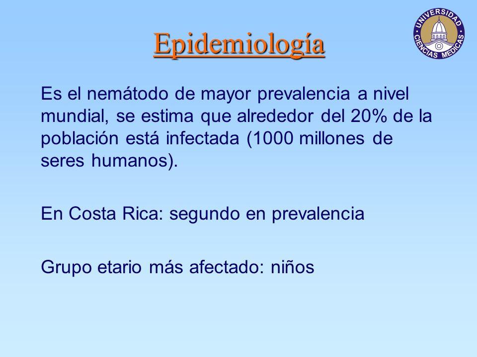 Epidemiología Es el nemátodo de mayor prevalencia a nivel mundial, se estima que alrededor del 20% de la población está infectada (1000 millones de seres humanos).