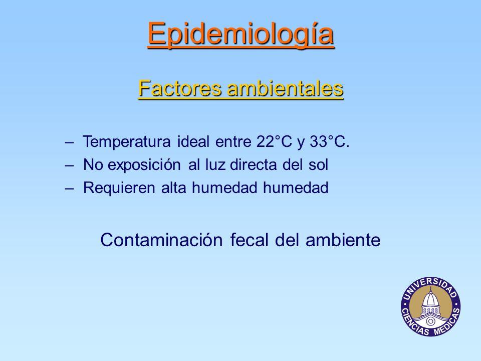 Epidemiología Factores ambientales – Temperatura ideal entre 22°C y 33°C.