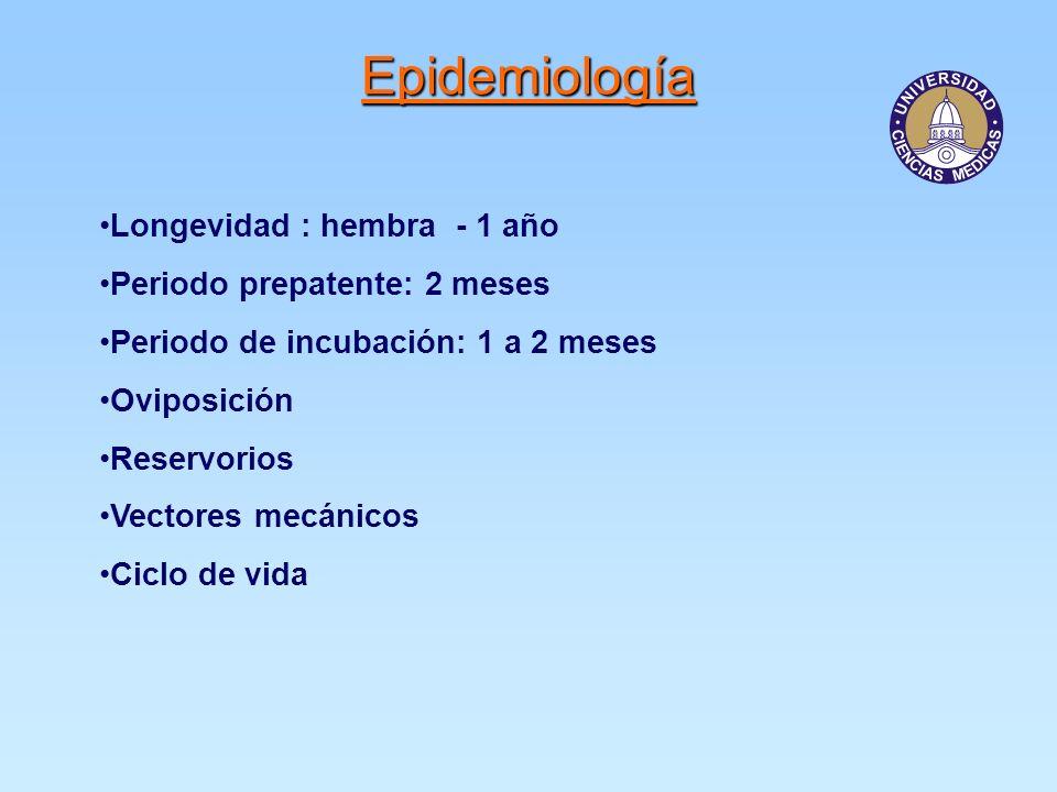 Epidemiología Longevidad : hembra - 1 año Periodo prepatente: 2 meses Periodo de incubación: 1 a 2 meses Oviposición Reservorios Vectores mecánicos Ciclo de vida