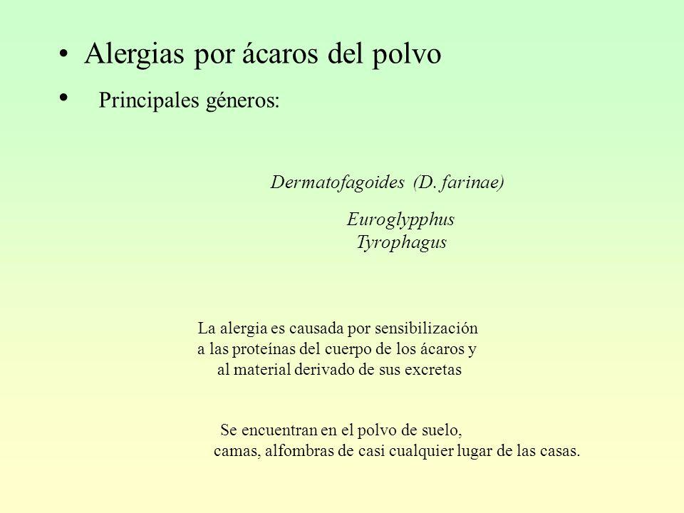 Alergias por ácaros del polvo Principales géneros: Dermatofagoides (D.
