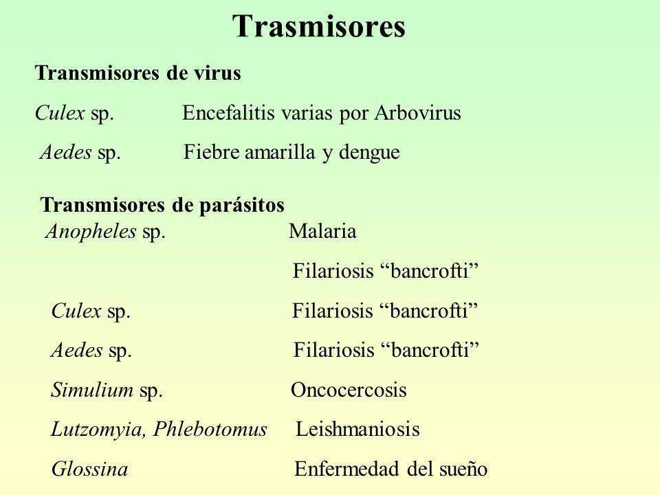 Trasmisores Transmisores de virus Culex sp.Encefalitis varias por Arbovirus Aedes sp.