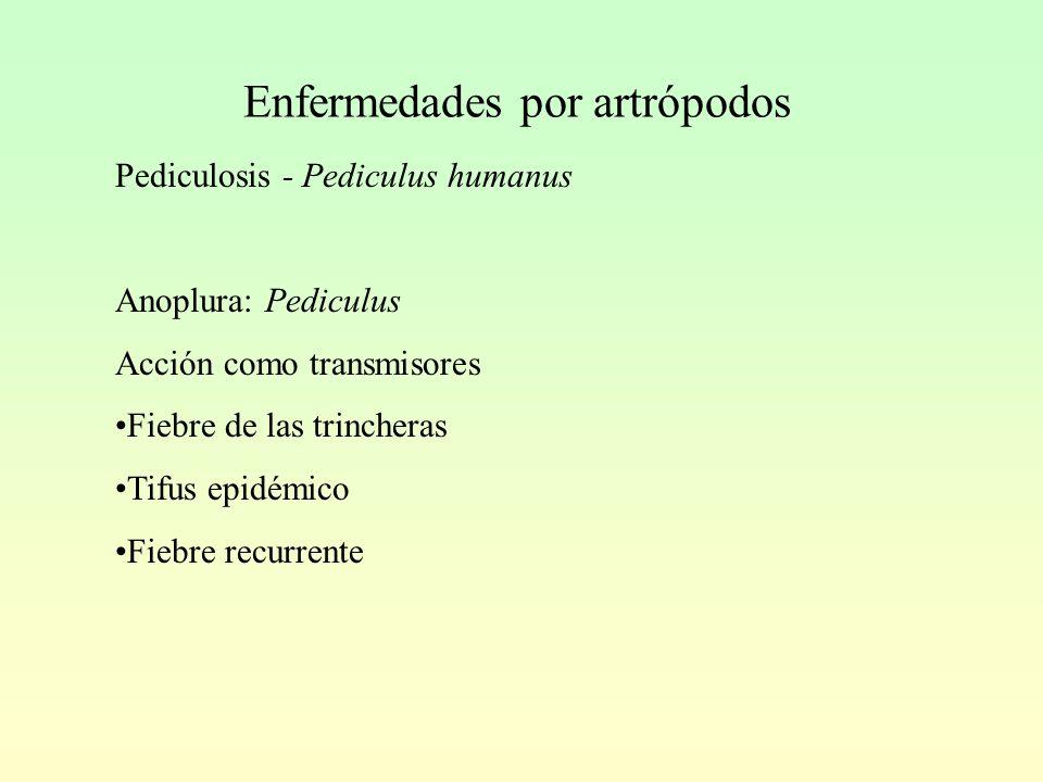 Enfermedades por artrópodos Pediculosis - Pediculus humanus Anoplura: Pediculus Acción como transmisores Fiebre de las trincheras Tifus epidémico Fiebre recurrente