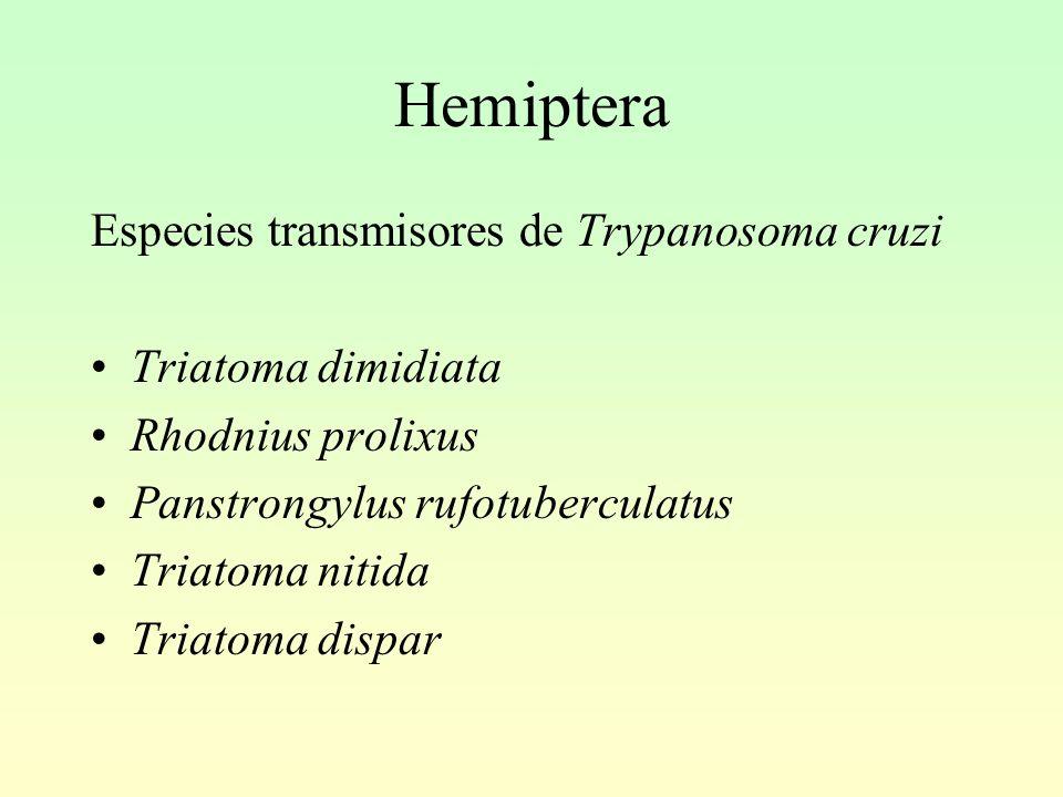 Hemiptera Especies transmisores de Trypanosoma cruzi Triatoma dimidiata Rhodnius prolixus Panstrongylus rufotuberculatus Triatoma nitida Triatoma dispar