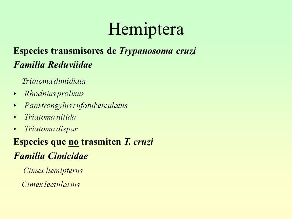 Hemiptera Especies transmisores de Trypanosoma cruzi Familia Reduviidae Triatoma dimidiata Rhodnius prolixus Panstrongylus rufotuberculatus Triatoma nitida Triatoma dispar Especies que no trasmiten T.
