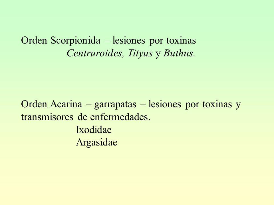 Orden Scorpionida – lesiones por toxinas Centruroides, Tityus y Buthus.