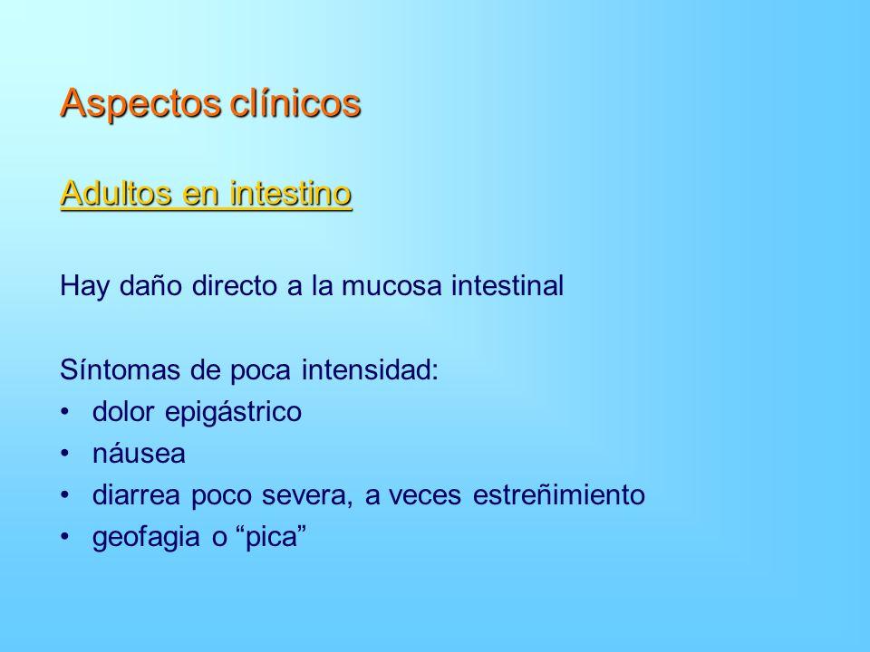 Aspectos clínicos Adultos en intestino Hay daño directo a la mucosa intestinal Síntomas de poca intensidad: dolor epigástrico náusea diarrea poco seve