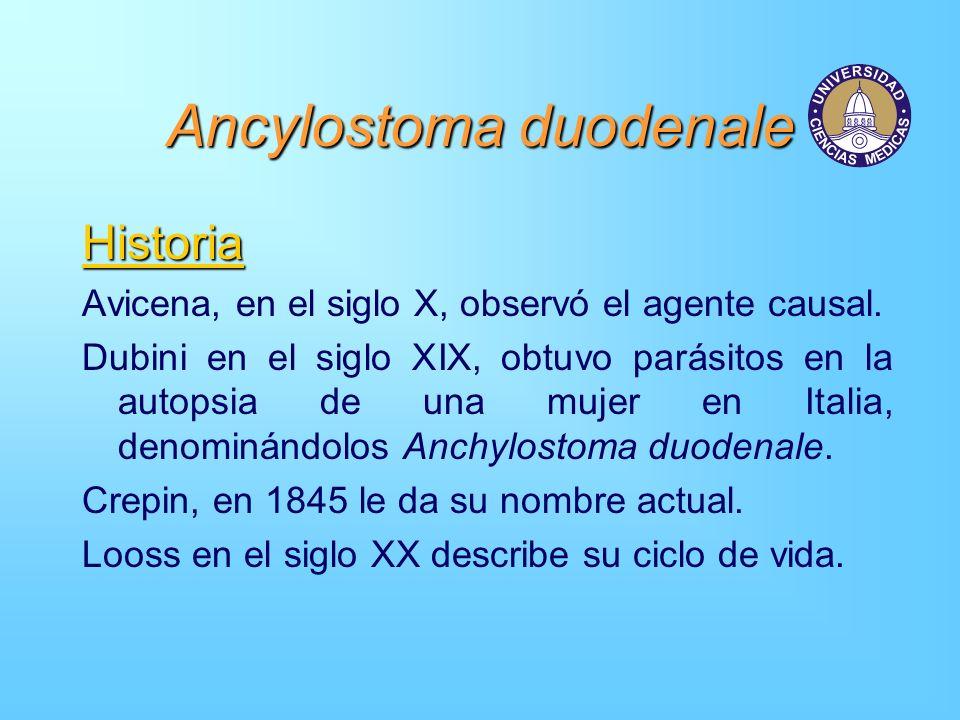 Ancylostoma duodenale Historia Avicena, en el siglo X, observó el agente causal. Dubini en el siglo XIX, obtuvo parásitos en la autopsia de una mujer