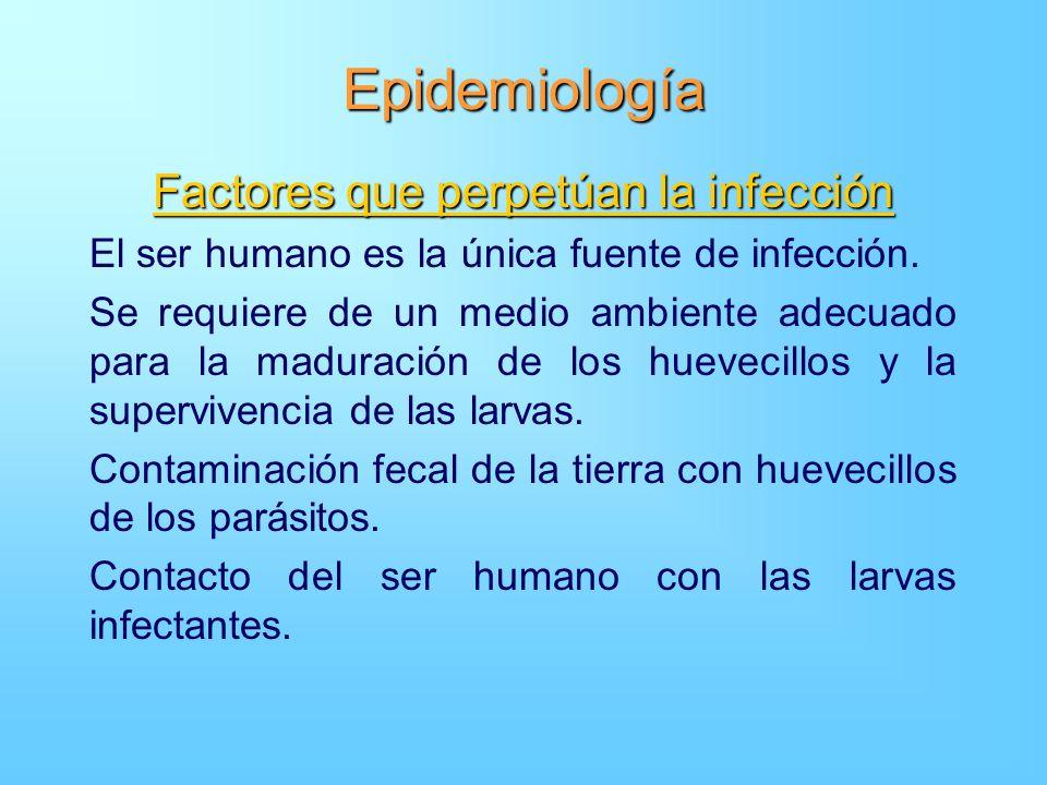 Epidemiología Factores que perpetúan la infección El ser humano es la única fuente de infección. Se requiere de un medio ambiente adecuado para la mad