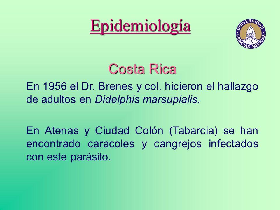 Epidemiología Costa Rica En 1956 el Dr. Brenes y col. hicieron el hallazgo de adultos en Didelphis marsupialis. En Atenas y Ciudad Colón (Tabarcia) se