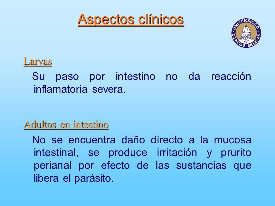 Aspectos clínicos Larvas Su paso por intestino no da reacción inflamatoria severa. Adultos en intestino No se encuentra daño directo a la mucosa intes