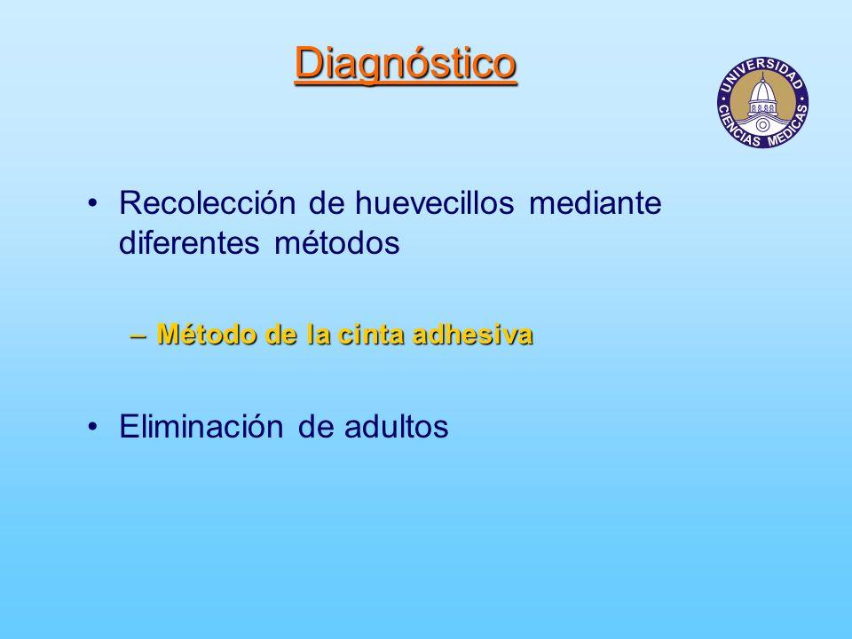 Diagnóstico Recolección de huevecillos mediante diferentes métodos –Método de la cinta adhesiva Eliminación de adultos